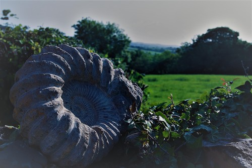 ammonite-wall-smiths-farm-cottages