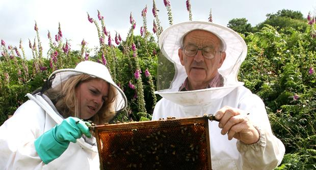 Beekeepers studying the a hive