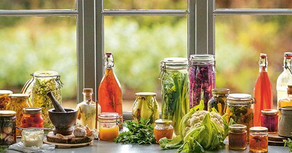 fermentation-cover