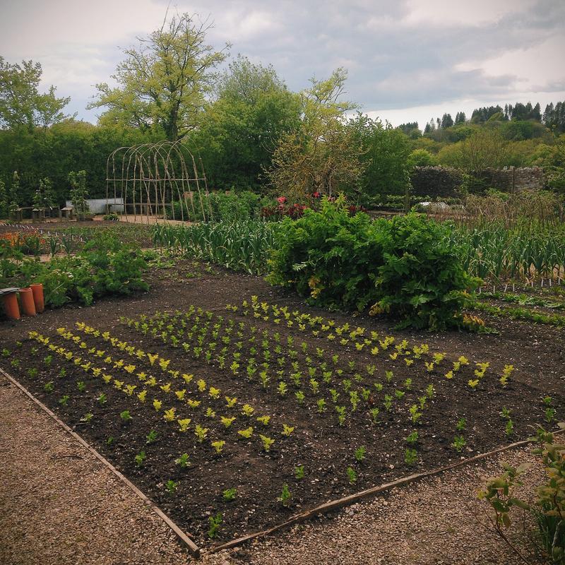 garden-34