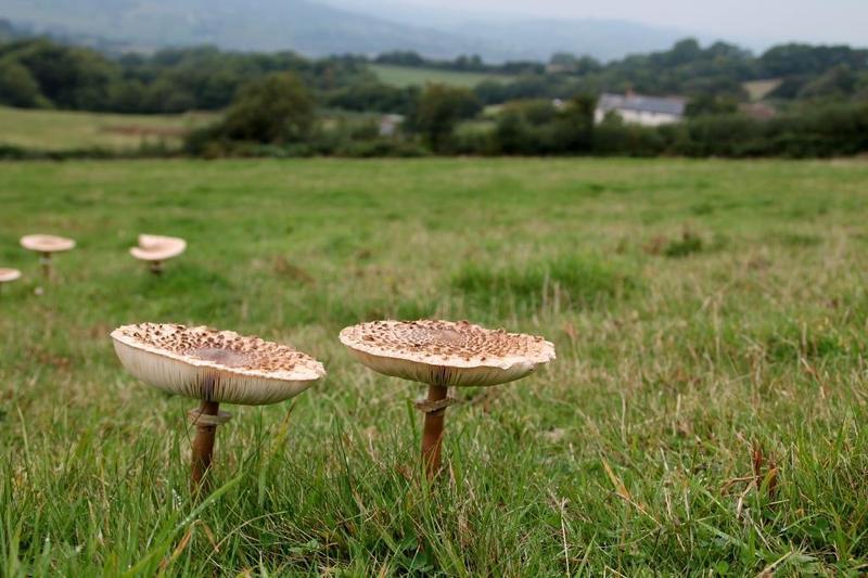 Mushroom Foraging - Image 2