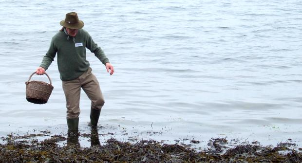 Seashore Foraging - Image 1