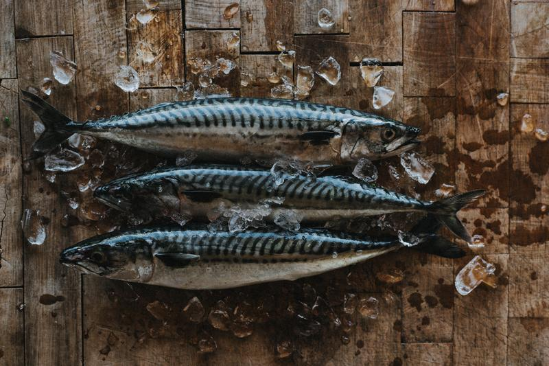 matt-austin-fish-mackerel-3