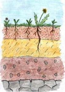 rchq-soils-1