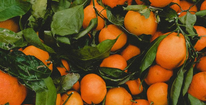 Seville orange marmalade - Image 1