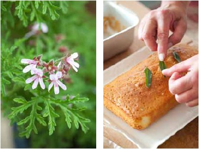 Scent from heaven cake (lemon verbena)
